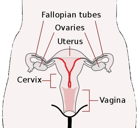 Symptoms, diagnosis and treatment of ovarian cancer | Total Health