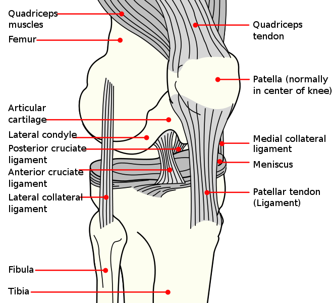 Diagnosing And Treating Knee Ligament Injuries Total Health