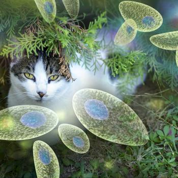 Cats and toxoplasmosis
